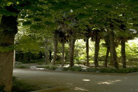 Guía de parques y jardines de la ciudad de Guadalajara ...
