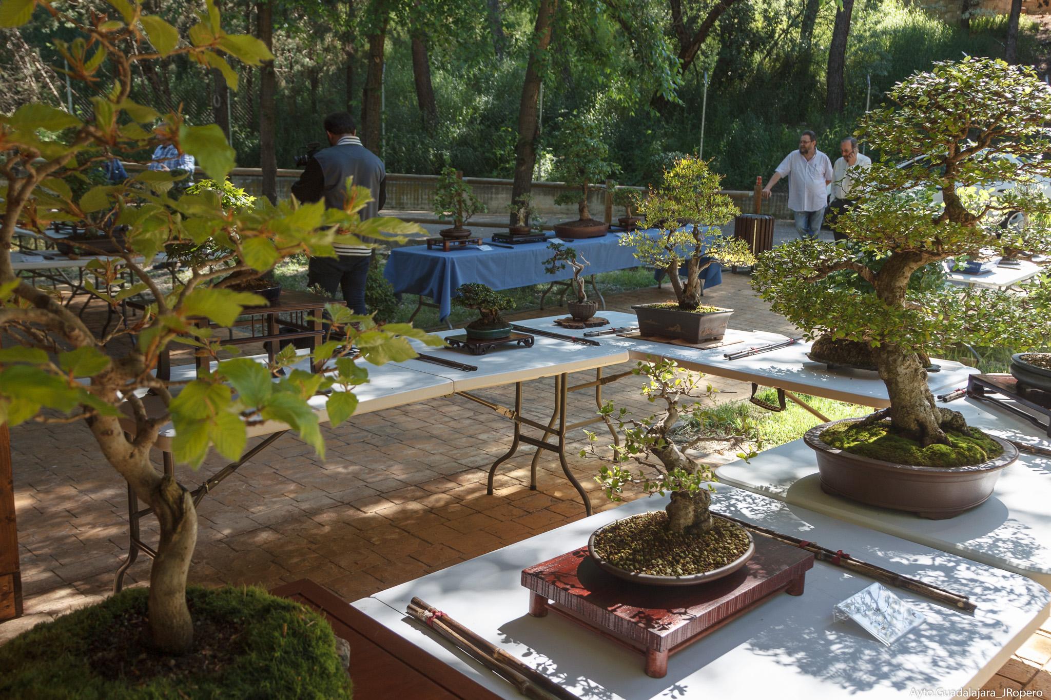 VII Exposición de Bonsái Guadalajara 2019 en el Aula de la Naturaleza del Zoo